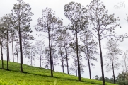 When trees add to the panoramic tea estates