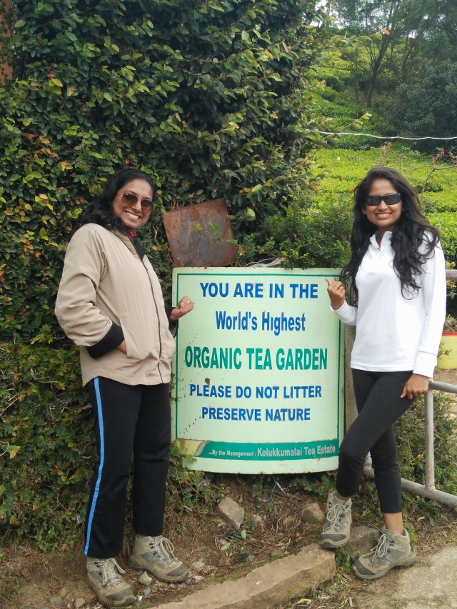 At the World's Highest Organic Tea Garden