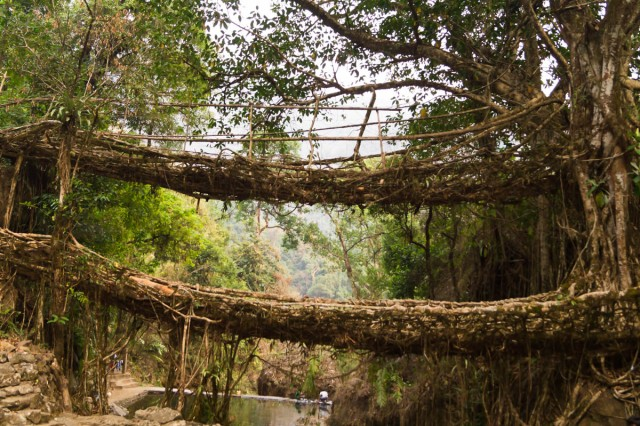Double decker Living root bridge, Shwetha Krish, ShoePenLens